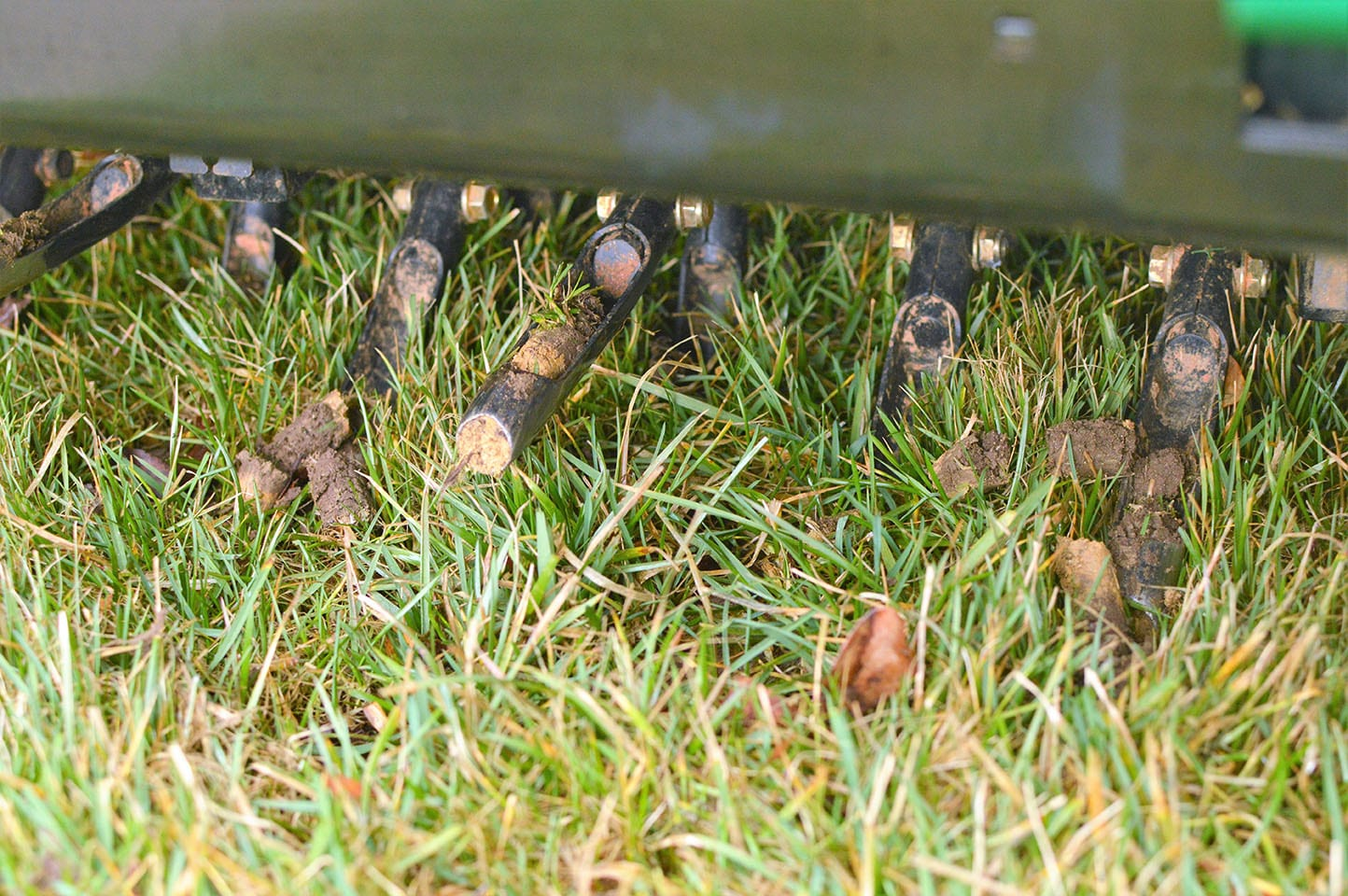 Aeration plugs after core aeration service