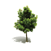 Tree icon for Land-Art in Florida & Ohio