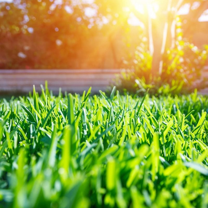 Summer lawn care here in Whitehouse, OH will give your lawn the healthy foundation it needs going into the tough Ohio winter.