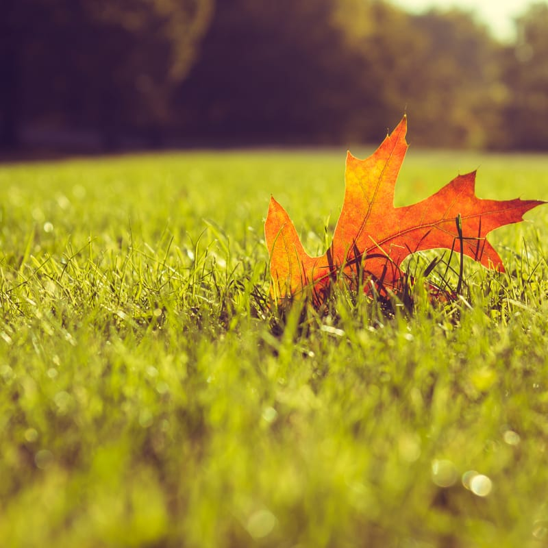 Lawn aeration in the fall is one of the best lawn care services that you can do for your Whitehouse, OH lawn.