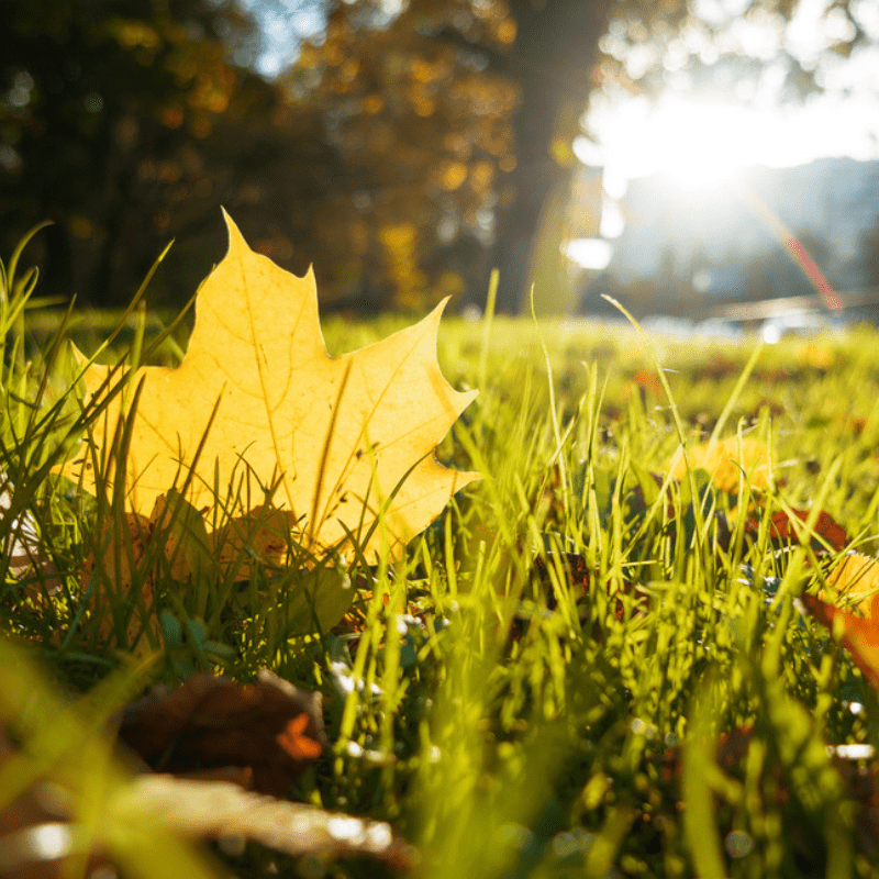 Fall lawn fertilization is a great way to give your Toledo, OH lawn the nutrients it needs this fall.