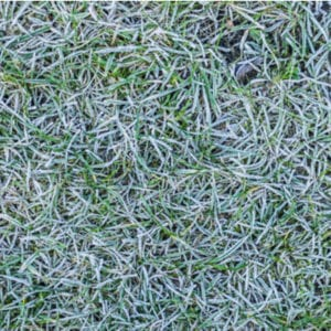 Crown hydration will freeze your grass and cause winter kill in your Waterville, OH lawn.