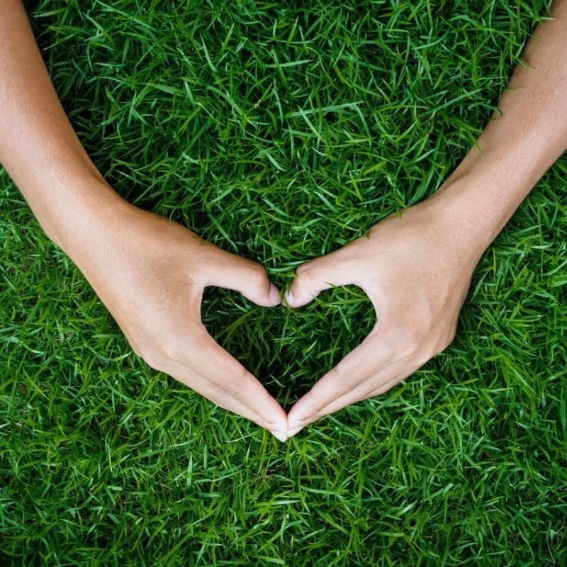 Give your Ohio lawn the love it needs this year by setting your lawn care strategy early and then sticking to it.