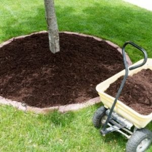 Adding mulch around your trees is a healthy addition to your 2020 tree care plan.
