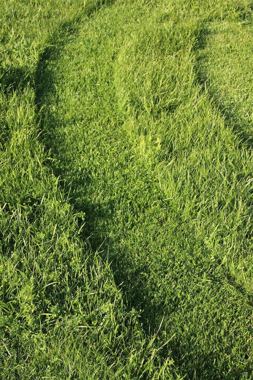 freshly cut lawn with grass lines