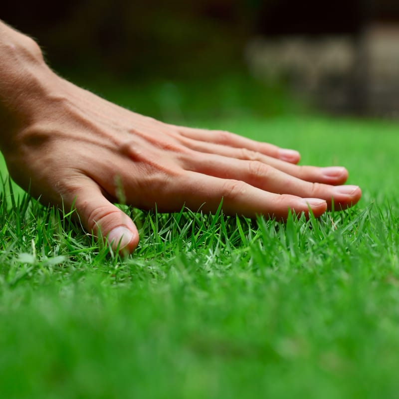 Spring lawn care is the best way to give your Ohio lawn a fresh and healthy start to the year.