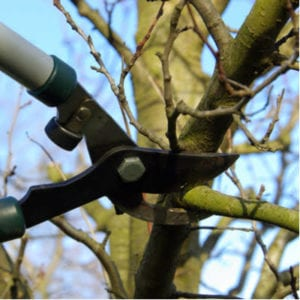 Pruning your Ohio trees is an essential step in spring tree care.