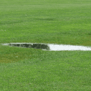 water puddling on grass