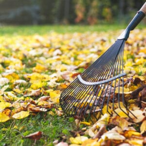 raking leaves on lawn