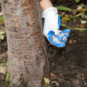 tree fertilizer