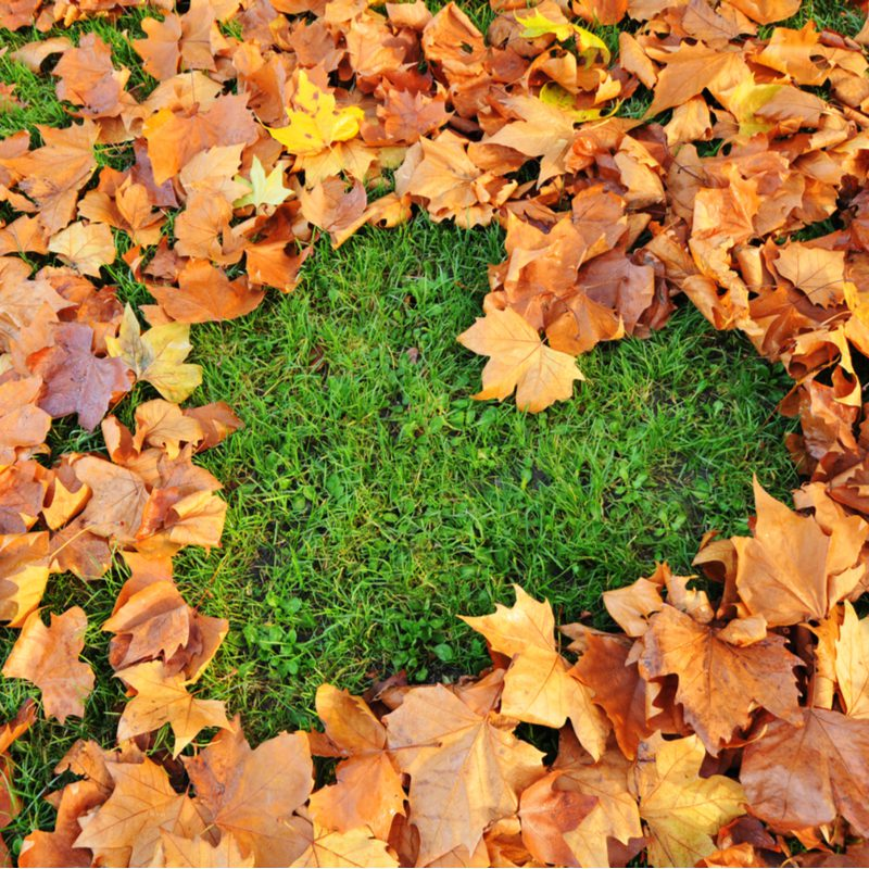 heart on grass made out of fall leaves