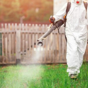 professional mosquito control in back yard